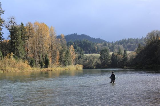 Another successful Summer Steelhead Fly Fishing Trip in Oregon | Holloway Bros
