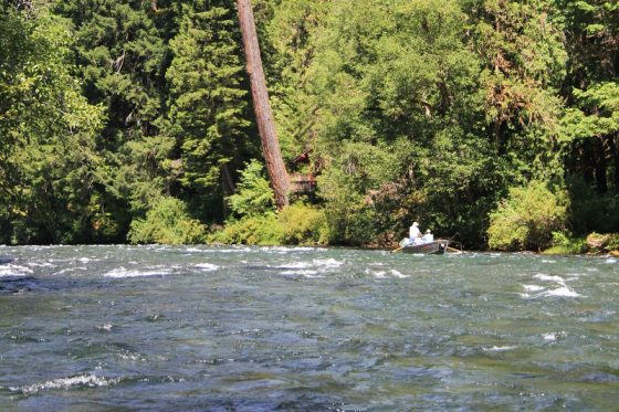 The McKenzie River is Beautiful to Fly Fish for Trout | Holloway Bros Oregon Guides