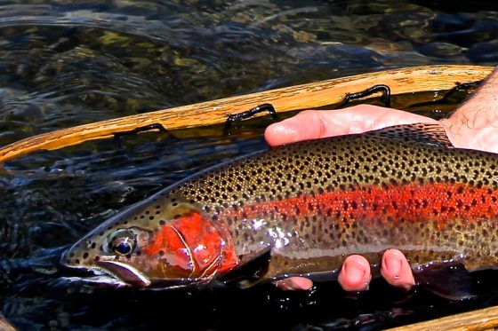 Oregon waters provide some of the world's most beautiful Trout | Holloway bros