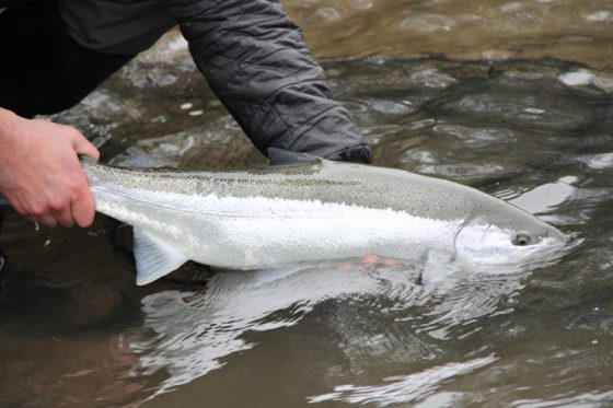 Fly Fishing for Winter Steelhead with the Holloway Bros, located in Eugene Oregon